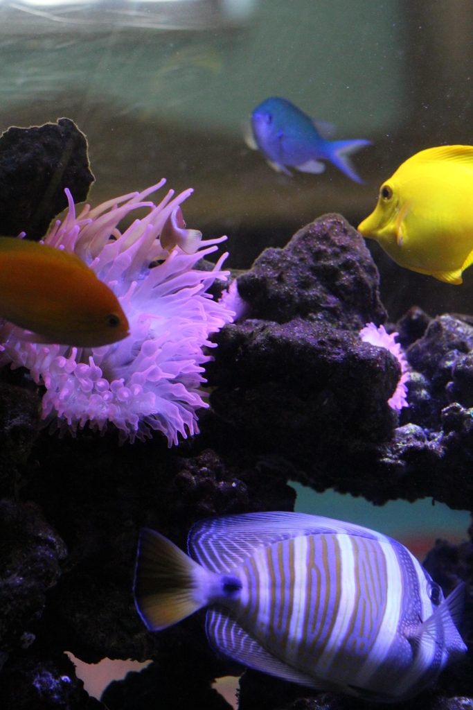 MCPL_Aquarium