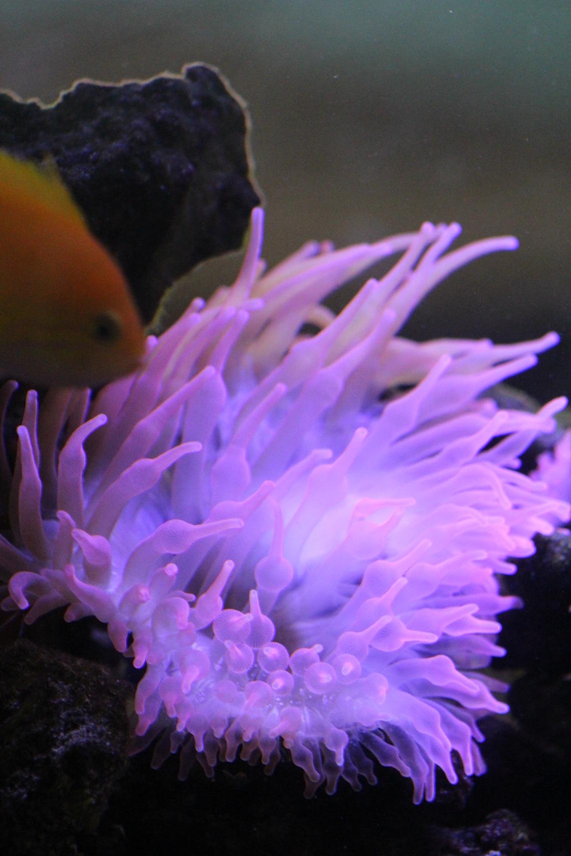 MCPL_Aquarium_3
