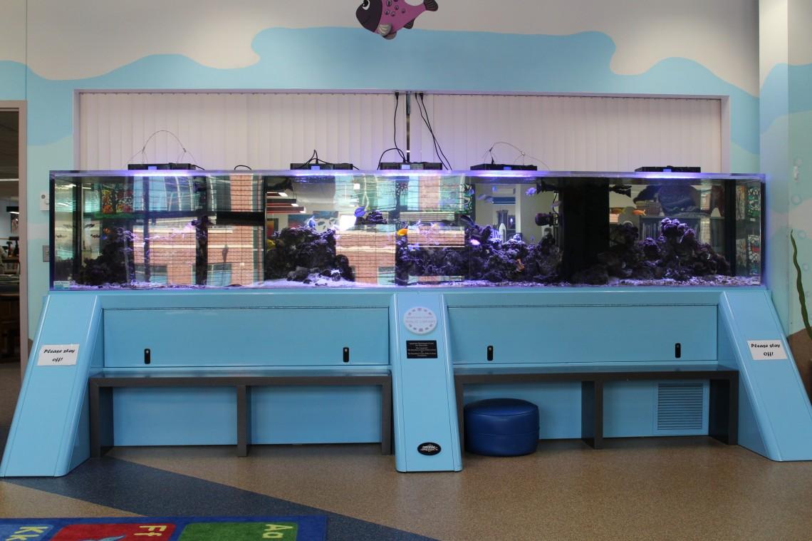 Phyllis_Donner_Aquarium