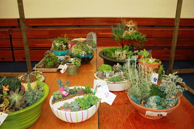 4-H_plants