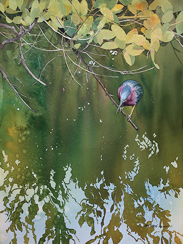 R-497 Green Heron, Red Mangrove