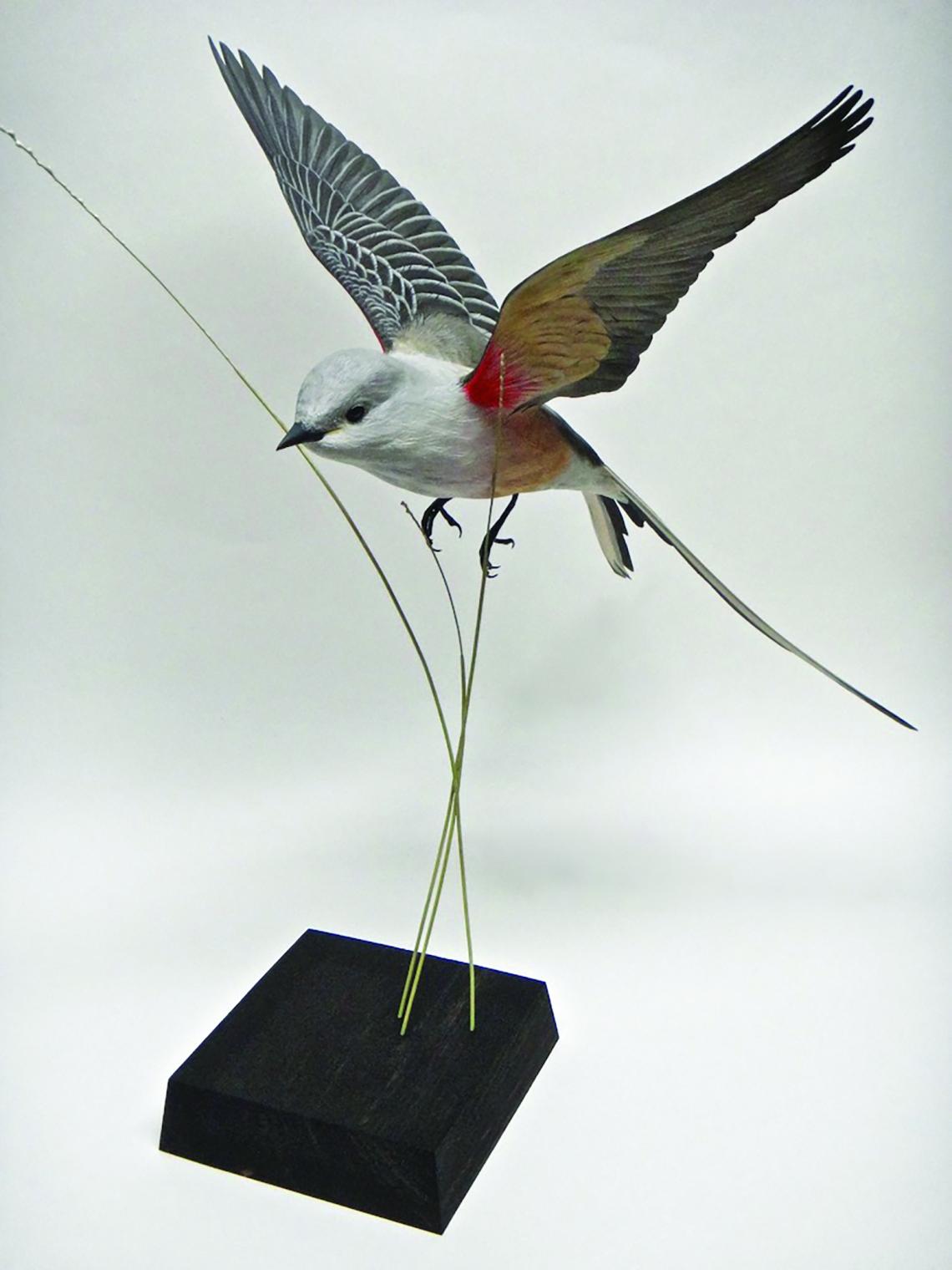 Scissor-tailed flycatcher view 2