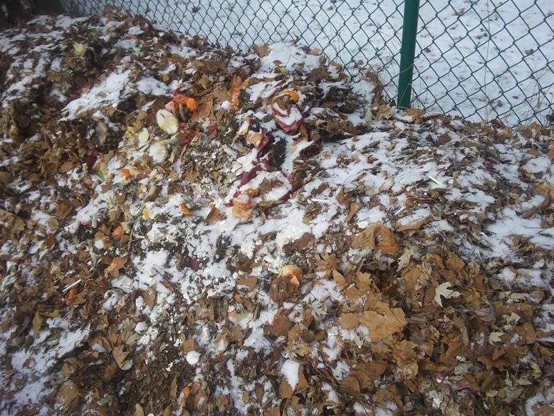compost-winter