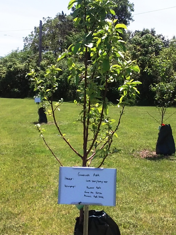 Fruit Trees at Gaining Ground Gardens