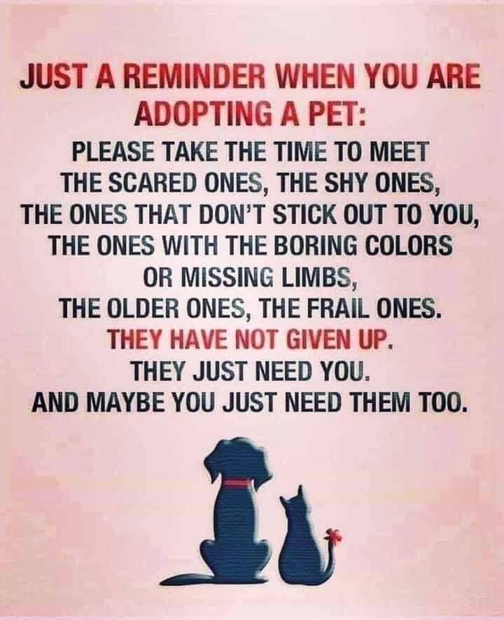 Poster about adopting an older pet