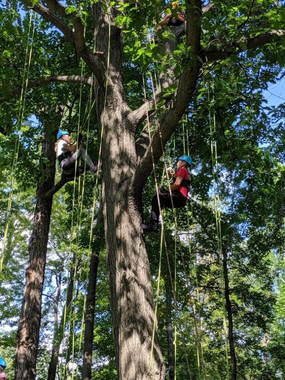 Treetop_Explorers